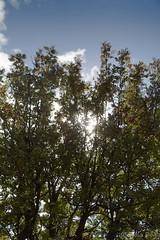 (Fjola Dogg) Tags: autumn sky cloud fall nature canon iceland islandia haust sland nttra 2012 50d canon50d fjoladogg fjladgg