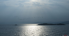 Heading south... (bent inge) Tags: blue lighthouse birds norway fyr rogaland rennesy norwegianfjord boknafjorden mortavika bentingeask askphoto