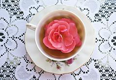 Rose Tea (Taylor Daniels Photography) Tags: flowers cup rose tea lace teacup 2012