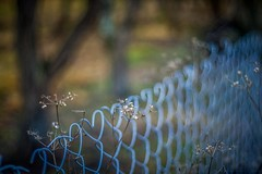 Love n' Fence Friday! (icemanphotos) Tags: lighting blue trees light favorite color colour art love nature colors beautiful composition digital canon fence amazing cool interesting fantastic wire focus pretty dof artistic bokeh background gorgeous magic awesome style superior best stunning excellent incredible tone breathtaking exciting techniques hff colorgrading fencefriday twittertuesday icemanphotos