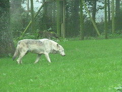 """Longleat Safari Park • <a style=""""font-size:0.8em;"""" href=""""http://www.flickr.com/photos/81195048@N05/8017582428/"""" target=""""_blank"""">View on Flickr</a>"""