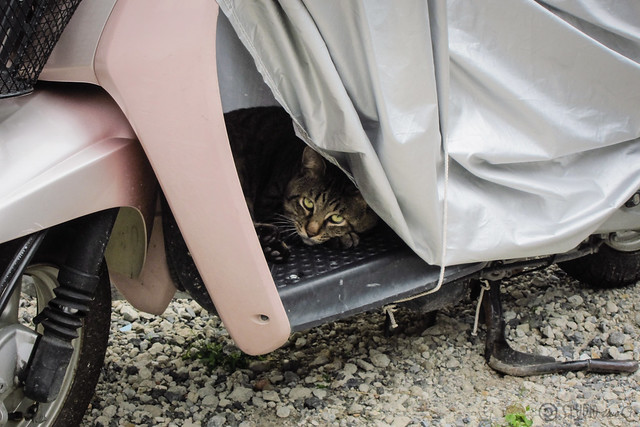 Today's Cat@2012-09-29