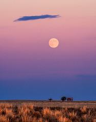 Harvest Moon (Bryce Bradford) Tags: moon house abandoned landscape twilight colorado great harvest olympus full moonrise shack prairie 75300mm plains omd em5 mzuiko f4867