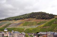 Vineyards above Bernkastel-Kues (larigan.) Tags: germany town vineyards viticulture mosel moselle bernkastelkues wineproduction healthresort larigan phamilton