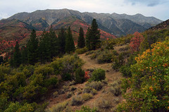 en route to mount nebo (1) (ctfy) Tags: trees fall pine utah maple oak mt view loop good scenic brush sage evergreen fir aspen nebo