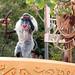 Disneyland GayDays 2012 071