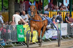 070fotograaf_20160728_046.jpg (070fotograaf, evenementen fotograaf) Tags: harnessracing racing draverij drafsport paardensport paardesport harness paardenmarkt holland netherlands nederland 070fotograaf kortebaandraverij voorschoten 2016 paarden draven kortebaan