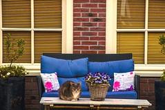 Camouflage (Lorybusin) Tags: finestre kitty mesa ventanas windows nikon katzen gatto  view mascotas animals house gato cats pets