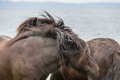 Together (Infomastern) Tags: hallandsvder vdern animal djur horse hst exif:model=canoneos760d geocountry camera:make=canon geocity camera:model=canoneos760d exif:focallength=155mm exif:isospeed=250 geolocation exif:lens=efs18200mmf3556is geostate exif:aperture=56 exif:make=canon