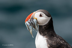 The Classic Puffin Shot D50_2298.jpg (Mobile Lynn) Tags: nature birds puffin wild bird fauna fratercula wildlife farneislands northumberland england gb coth specanimal greatphotographers ngc npc