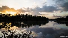 IMG_7891 (shitabhpillai) Tags: sun sunset yellow blue trees tree backwaters canon 6d tripod beautiful india kerala photography long exposure