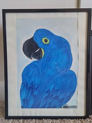 Hyacinth Macaw (jartloverartist) Tags: macaw parrot blue hyacinth art artwork drawing nature wildlife exotic bird