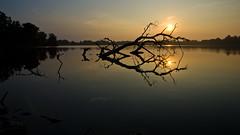 Morning (ramseybuckeye) Tags: lima lake allen county ohio sun fallen tree water reflection pentax art life landscape morning
