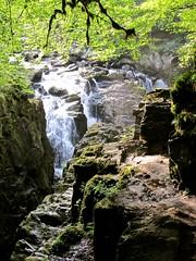 Variations (Traigh Mhor) Tags: 2016 dunkeld august perthshire scotland hermitage nts nationaltrustscotland