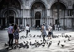 2016-08-12_Venedig - Venice - gritty version_IMG_8146 (dieter_weinelt) Tags: bluesky brcken dieter fiona gondeln kanal kanle melanie morgenstimmung sommer2016 sonnenschein tauben touristen venedig venice victoria blauerhimmel boats boote bridges canals doves empty erarlymorning fastleer gondolas morgens nearlyempty notourists onlyworkers summer2016 sunshine tourists