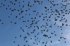 birds (dr.larsbergmann) Tags: birdsinflight animal flickr explored