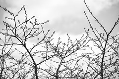 Looking up in black and white (Dotsy McCurly) Tags: sky clouds trees nature beautiful nikon d750 dof bokeh monochrome black white nj