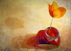 orange poppy in brown bottle (Hal Halli) Tags: stilllife poppy orange flower wallart shadow oldmasters netartii artdigital