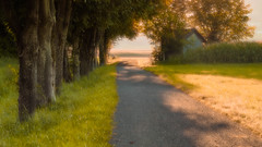 Poetic Afternoon (marco soraperra) Tags: tree nikon nikkor light shadow backlight impressionism green verde yellow warm summer field doubleexposure poetic licht sonne mehrfachbelichtung baum poesie impressionismus sommer grn gelb bank feld gras scheune