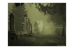 0.01 (TooLoose-LeTrek) Tags: fog haze mist cemetery headstone gravemarker monotone