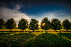 Some in a row (m@yphotos) Tags: trees sky sun tree pflanze feld meadow himmel row sonne bume baum reihe mygearandme mygearandmepremium mygearandmebronze mygearandmesilver mygearandmegold mygearandmeplatinum mygearandmediamond bestofblinkwinners flickrstruereflection1 flickrstruereflection2