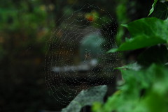 interesting morning (irina_h) Tags: danger garden insect spider web aranha