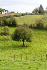 Pr (Cletus Awreetus) Tags: france rhne prairie t paysage arbre champ pr montsdulyonnais pturage hauterivoire
