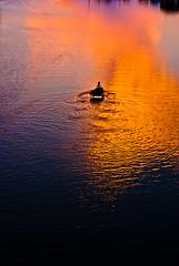 320/365. ओ माझी रे / O Majhi Re. (Anant N S) Tags: sunset orange india water beautiful yellow river photography 50mm boat fisherman purple bluewater nikkor pune aundh beautifulsunset project365 kishorekumar rdburman gulzaar nikond3000 lensor anantns thelensor anantnathsharma boatinariver omajhire ओमाझीरे