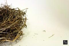 Bird's Nest (throwerandturner) Tags: urban brown white abstract bird nature birds modern georgia pretty natural nest athens clean simple minimalist neutral