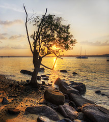 A tree at sunset