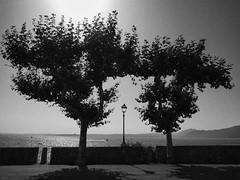 Lago di Garda (m.a.r.c.i) Tags: street leica italien italy tree lago garda italia marci dlux torri dlux4