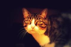 ntimo (Arthur_Lopes) Tags: olhar gato felino miau