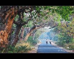 the journey (thyaagoo) Tags: road trees india tree men dogs leaves bicycle rural countryside nikon branches indian south talk journey cycle vegetation canopy avenue 70300mm tamil vr nadu d40 vedanthangal maduranthagam