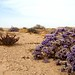 Vida no deserto!