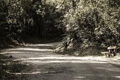 "Cantareira 2012 (Ricardo ""BATERA"" Sousa) Tags: sun tree sol beautiful leaves stone contrast forest photoshop canon bench landscape town photo spring cool track photographer image sweet tranquility oasis arvore fotografo trilha batera digitalcameraclub blackwhitephotos 60d abigfave flickrdiamond ricardosousa"