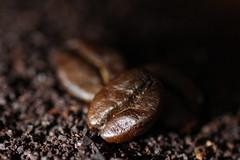 Coffee Beans (James C Sheng) Tags: food macro coffee ground bean brew