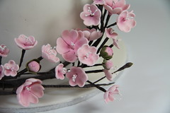 Cherry blossom close up (Sugarandslice (Emma)) Tags: cherry blossom cherryblossom
