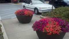 interior plantscaping (lyndaleplantservices) Tags: interior mn plantscaping plantboxes interiorplantscaping