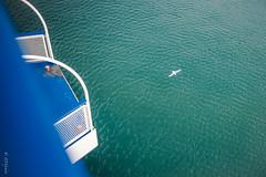 Fly away (zmi66 - ZMIphoto) Tags: show trip light sea summer people mer art switzerland nikon raw d700 vacancessardaigne