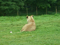 """Longleat Safari Park • <a style=""""font-size:0.8em;"""" href=""""http://www.flickr.com/photos/81195048@N05/8017657072/"""" target=""""_blank"""">View on Flickr</a>"""