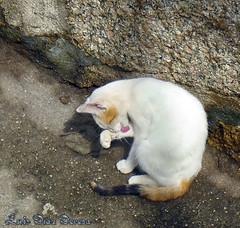 gato (Luis Diaz Devesa) Tags: espaa spain europa galicia galiza pontevedra vilagarciadearousa villagarciadearosa luisdiazdevesa