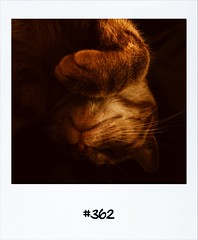 """#DailyPolaroid of 24-9-12 #362 • <a style=""""font-size:0.8em;"""" href=""""http://www.flickr.com/photos/47939785@N05/8030203395/"""" target=""""_blank"""">View on Flickr</a>"""