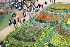 canberra 188 (raqib) Tags: flower floral garden flora capital australia tulip canberra rc act floriade flowerfestival australiancapitalterritory d90 canberrafloriade