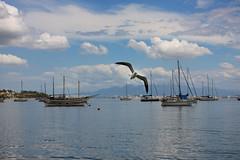 Santo Antnio de Lisboa - Florianpolis (Dircinha -) Tags: brazil praia southamerica brasil mar florianopolis santacatarina gaivota amricadosul brasilemimagens gtyok