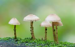 Fungus (Kees Waterlander) Tags: emmerdennen drenthe nederland thenetherlands emmen
