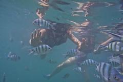 DSC09489 (andrewlorenzlong) Tags: fish swimming swim thailand snorkel sam snorkeling kohchang kohrang kohrangyai korangyai
