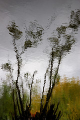 Watercolors II (offroadsound) Tags: autumn fall grey pond wind cloudy herbst viento surface illusion ripples watercolors teich spiegelung baum dolina impressionistic gestalten rippel herbststimmung wasseroberflche melancholie doline wasserfarben tagtraum scratchingthesurface kruseln nikond80 diekholzen tagtrumen erdflle erdfllediekholzen herbstgestalten