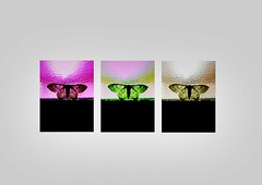 Triptych: Moths (mary01985) Tags: collage edited repetitive 3 nighttime night garden light butterfly door triptych brown yellow pink fly insect wings wing three moths window moth