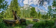 Nationalpark_BGD_05_fertig_ausgedruckt_A4.jpg (Photographie_Leuschner) Tags: berchtesgaden nationalpark wald hdr ramsau hdrausgangsbilder panoramaausgangsbilder fertigesbild