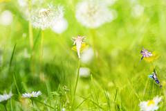 Fairy garden (robertsonamanda369) Tags: fairy fairygarden fantasy mystic